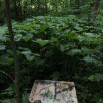 Painting by Landscape VII, 50 x 80 cm, 2020